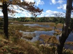 marsh near Eagle Lake